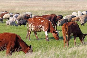 poľnohospodárske emisie
